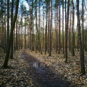 Enjoy a walk in the late autumn forest