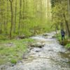 Take a relaxing walk in the spring forest